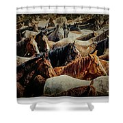 Horses 29 Shower Curtain