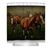Horses 31 Shower Curtain
