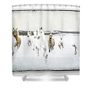Horses 33 Shower Curtain