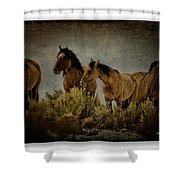 Horses 34 Shower Curtain