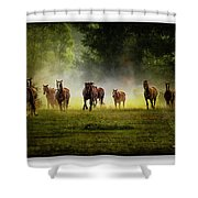 Horses 36 Shower Curtain