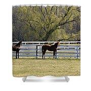 Horses 363 Shower Curtain
