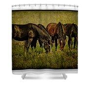 Horses 37 Shower Curtain