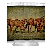 Horses 38 Shower Curtain