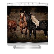 Horses 40 Shower Curtain