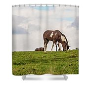 Horses And Clouds Shower Curtain by D K Wall