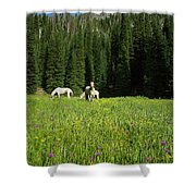 Horses Getting A Break Shower Curtain