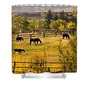Horses Grazing In The Late Afternoon Shower Curtain
