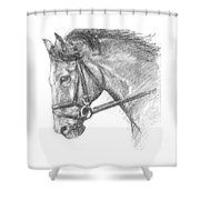 Horse's Head With Bridle Shower Curtain
