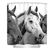 Horses - Id 16217-202749-4749 Shower Curtain