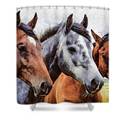 Horses - Id 16217-202754-0357 Shower Curtain