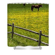 Horses In A Field Shower Curtain