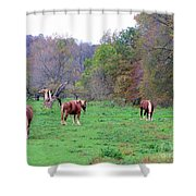 Horses In Autumn Amish Country Shower Curtain