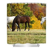 Horses In Autumn Shower Curtain