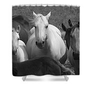 Horses In Black And White Shower Curtain