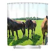 Horses In Bridgehampton Shower Curtain