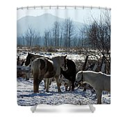 Horses In Front Of Quaggy Jo Shower Curtain