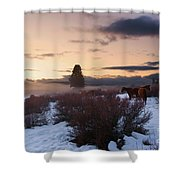 Horses In Snow At Sunset Shower Curtain