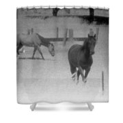 Horses In Summer  Shower Curtain