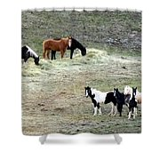 Horses In The Highlands Shower Curtain