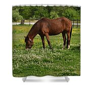 Horses In The Meadow 2 Shower Curtain