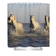 Horses In Water Shower Curtain