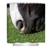 Horses Mouth Shower Curtain