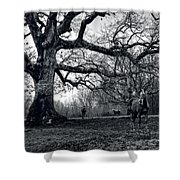 Horses On A Foggy Morning In Black And White Shower Curtain