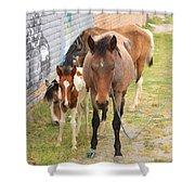 Horses On A Street Shower Curtain