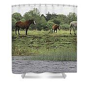 Horses On Ireland's River Shannon Shower Curtain