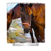 Horses On Jost  Shower Curtain