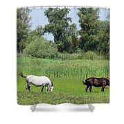 Horses On Pasture Nature Farm Scene Shower Curtain