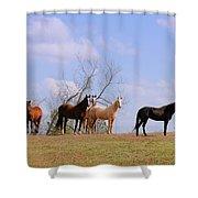 Horses On The Hill Shower Curtain
