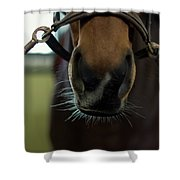 Horse Whiskers Shower Curtain