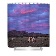 Horses With New Mexico Sunset Shower Curtain