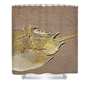 Horseshoe Crab Shower Curtain