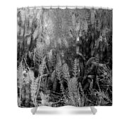 Horsetail Plant Panorama Two  Shower Curtain