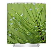 Horsetail With Dew Shower Curtain