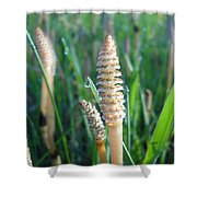 Horsetails And Dew Drops Shower Curtain