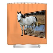 Horsing Around Shower Curtain by Shane Bechler