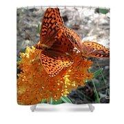 Horton Butterflies Shower Curtain