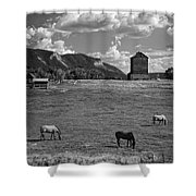 Horses Grazing At Mancos Grain Elevator Shower Curtain