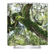 Host Tree Shower Curtain