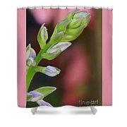 Hosta Blooming Shower Curtain