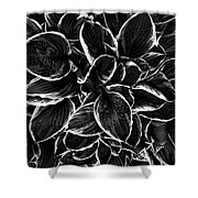 Hosta In Black And White Shower Curtain