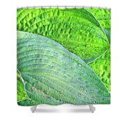 Hosta Lavista Baby Shower Curtain