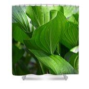 Hosta Waves Shower Curtain