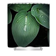 Hostas After The Rain Shower Curtain