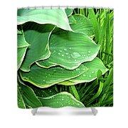 Hostas And Grass Shower Curtain