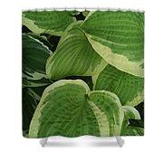 Hostas Galore Too Shower Curtain